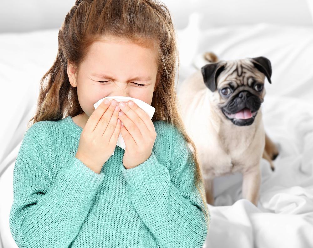 allergiás kutya macska