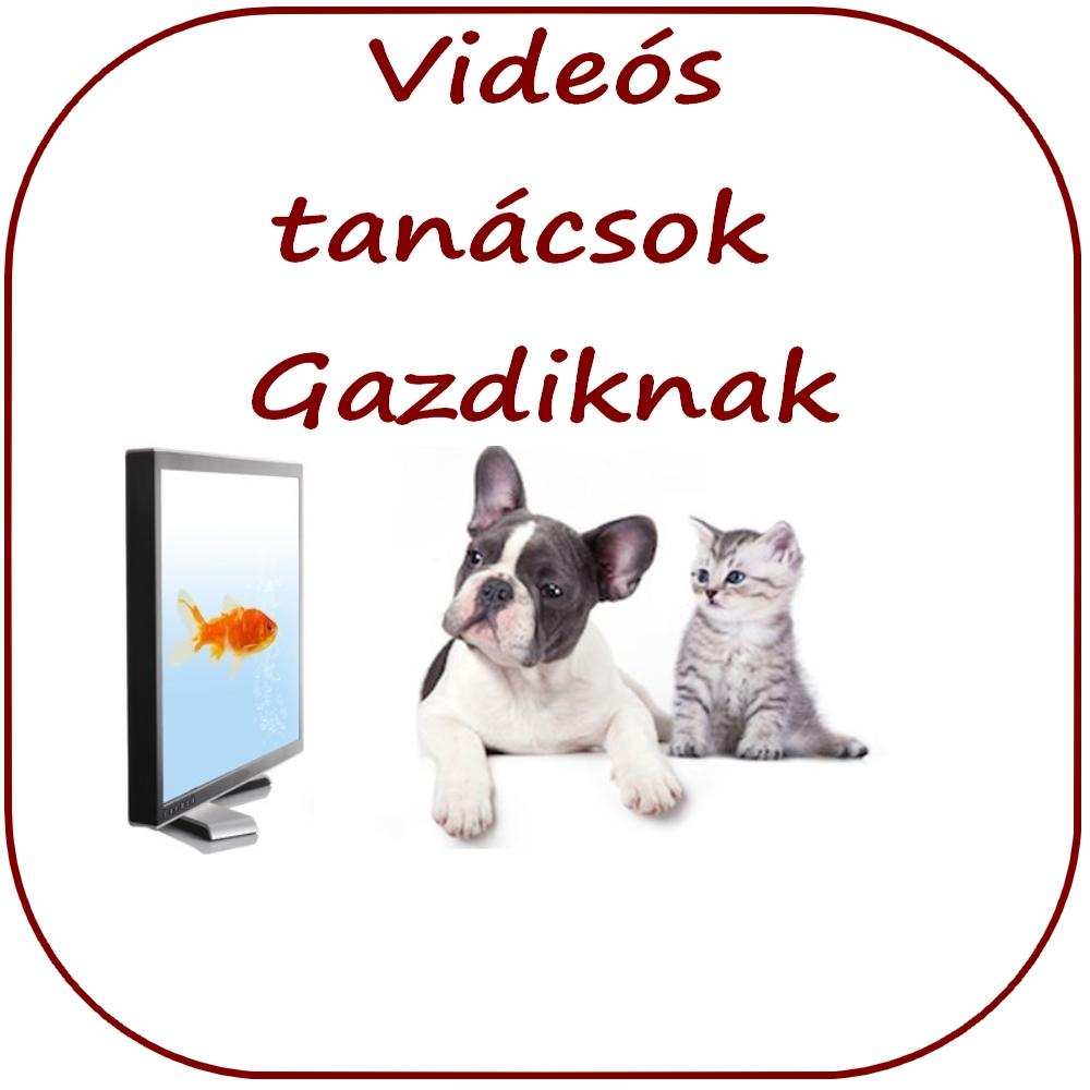 állatorvosi videók