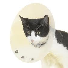 műtéti gallér, kutya, macska
