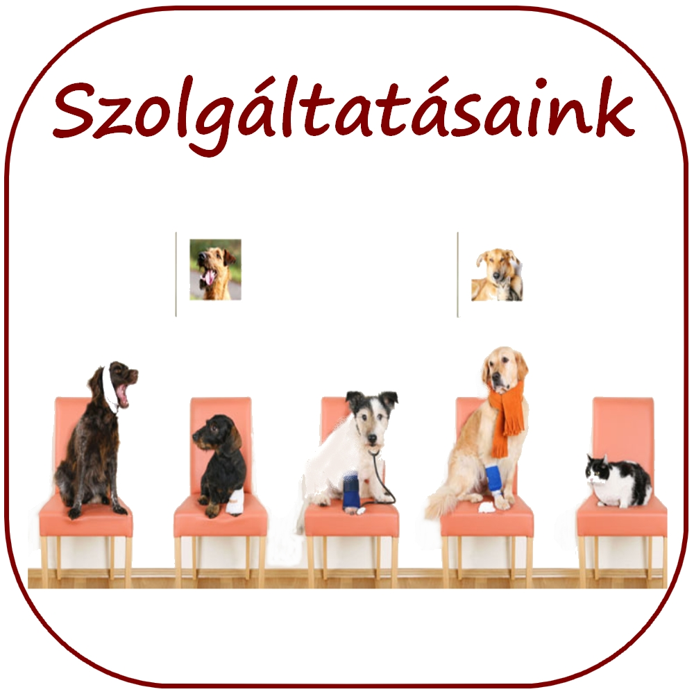 Józsavet Állatorvosi Rendelő Debrecen - JózsaVet Kisállatorvosi Rendelő e351e09dfe
